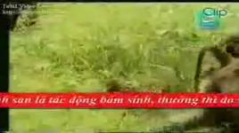 tap tinh cua dong vat (remmember the name) - fort minor