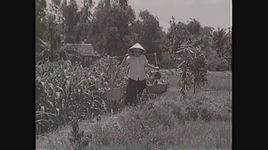 con khong ve (tan co) - trong phuc, hong nga