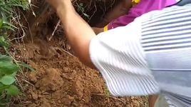 can canh bat ran ho mang trau dai 1,8m, nang hon 2,3kg - v.a