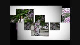 hoa tim bang lang - the phung