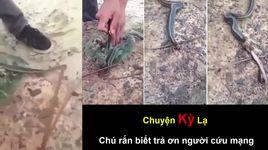 chuyen ky la - ran tra on nguoi cuu mang - v.a
