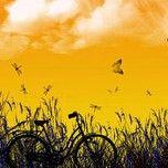 Tuyển Tập Những Bài Hát Hay Về Mùa Hạ