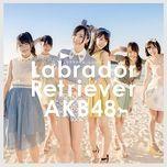 labrador retriever (type k) - akb48