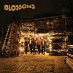honey sweet (single) - blossoms